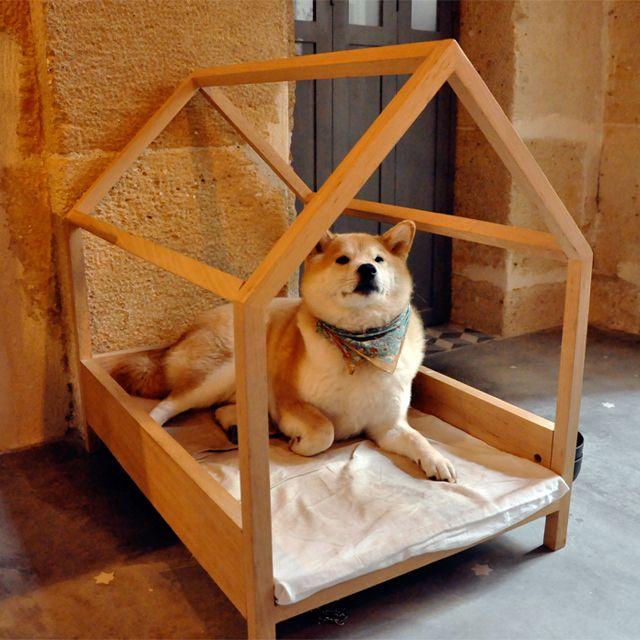 Mil anúncio presente cão Horta-7900