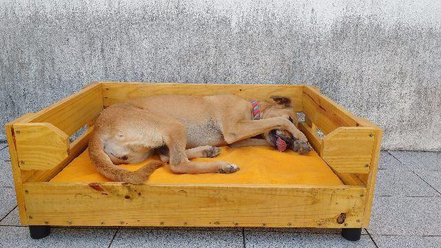 Mil anúncio presente cão Horta-4485