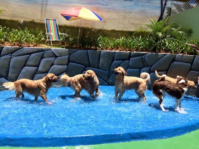 Mil anúncio presente cão Horta-9574