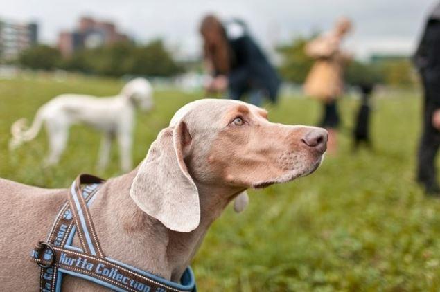Mil anúncio presente cão Horta-811