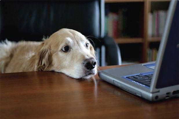 Mil anúncio presente cão Horta-687