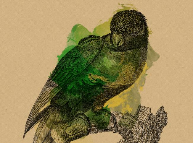 Mil anúncio sevilha papagaios-2746