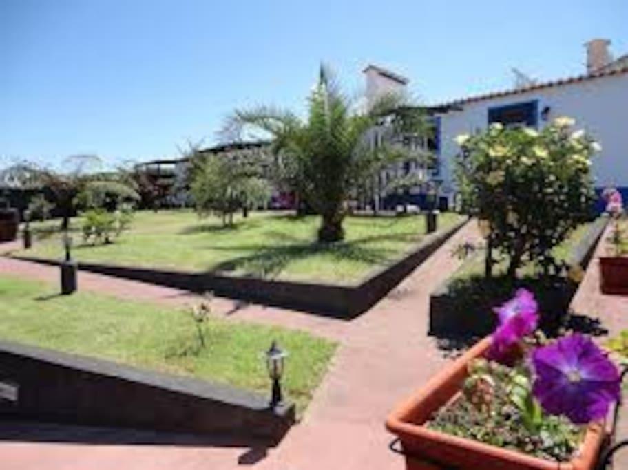Uncios contatos berçário Ponta Delgada-8611