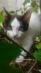 Uncios gatos Mesquita-4292
