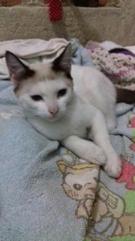 Uncios gatos Mesquita-5677