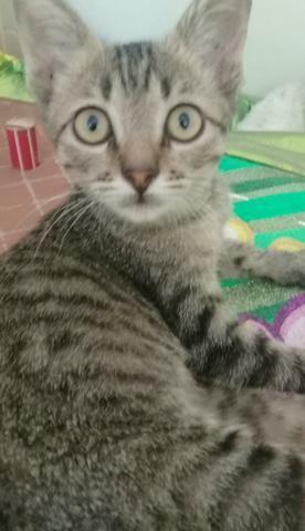 Uncios gatos Mesquita-5552