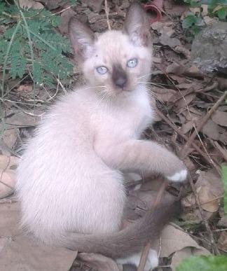 Uncios gatos Mesquita-4666